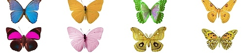 butterfly tatoo images