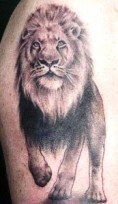 large stalking lion full body on dhoulder tattoo