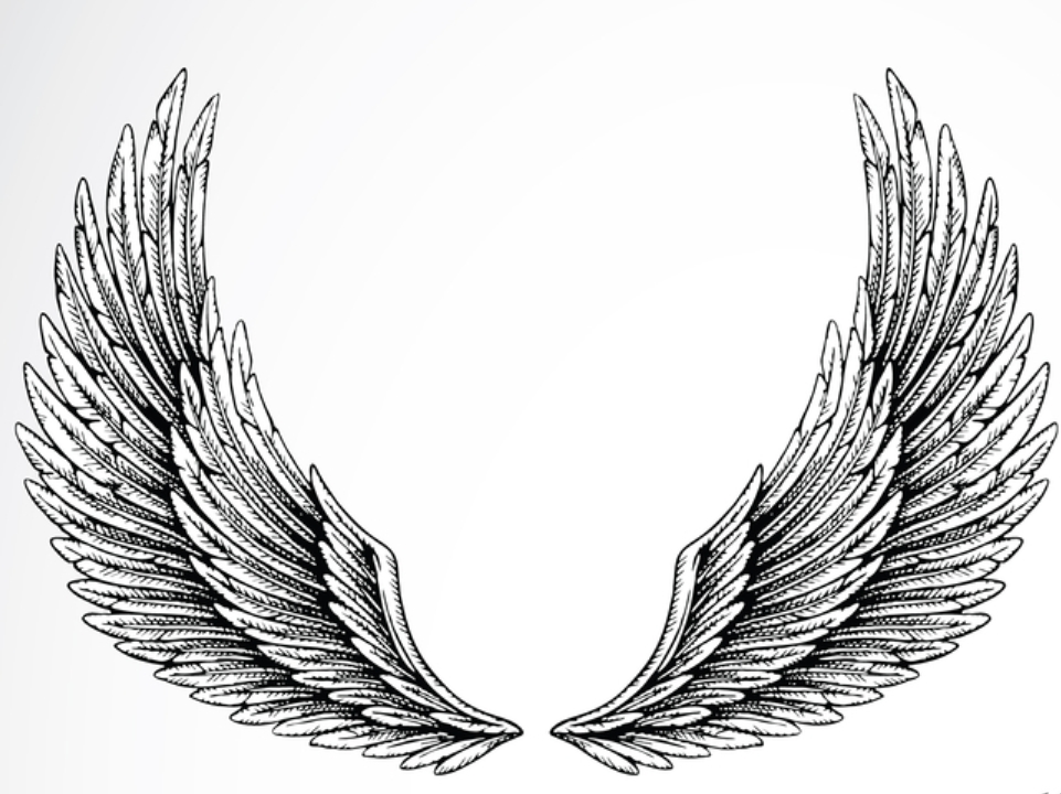Eagle Wings Drawings  ...