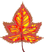 maple leaf tatto design